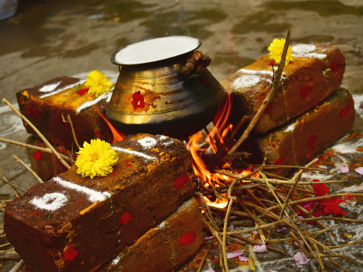 Why rice and milk are overflowed during Pongal celebrations ...