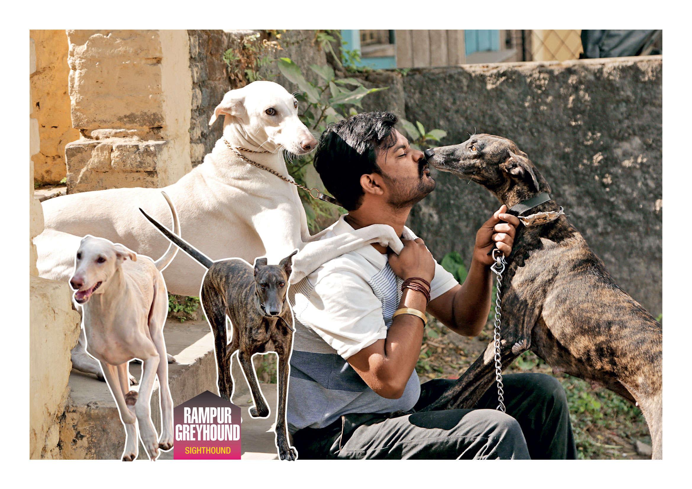 Kolkata dog lovers have a new crush: Indian hounds | Kolkata