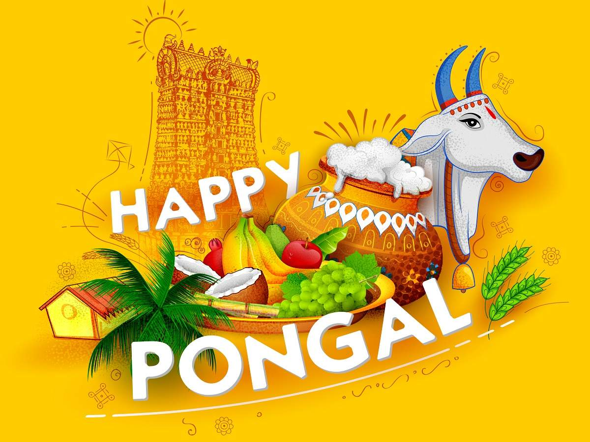 When is Pongal 2019? How it is celebrated? Date, Time