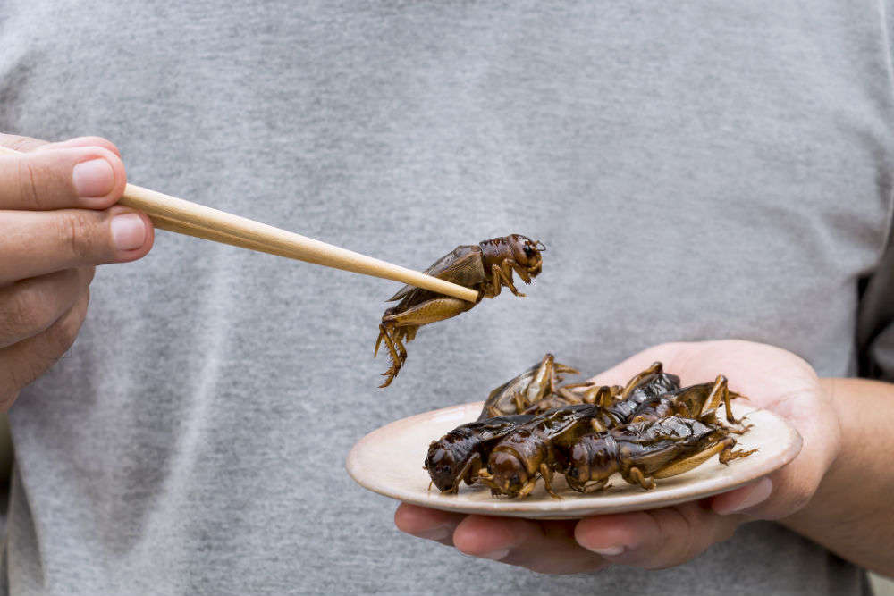 This insect restaurant in Thailand is taking fine-dining to next level
