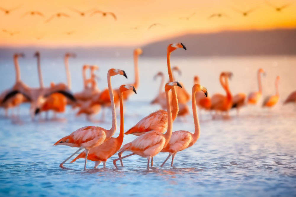 Flamingo Safaris are a huge hit in Mumbai's Airoli