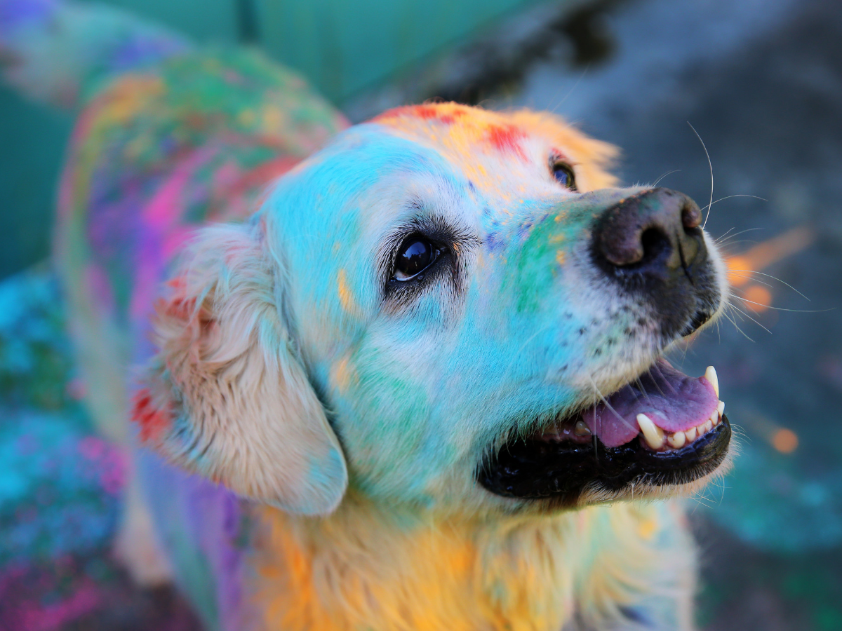 Protect your furry friend from toxic Holi colours