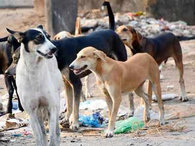Canine rumble in Sitapur boy shaved to death