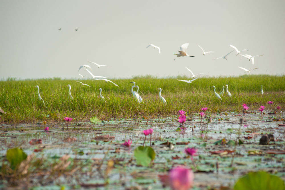 All about Mangalajodi in Odisha, a birdwatcher's paradise