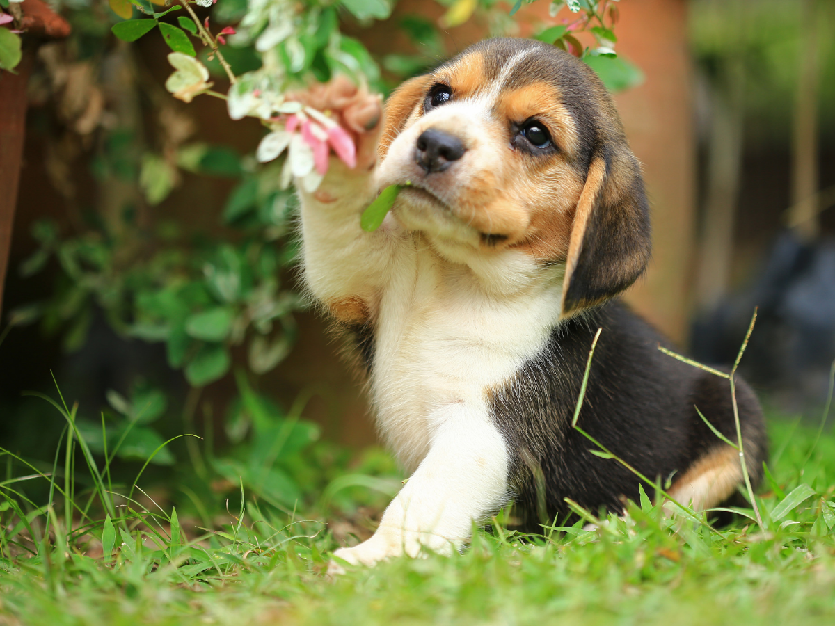 10 essentials for the canine traveller