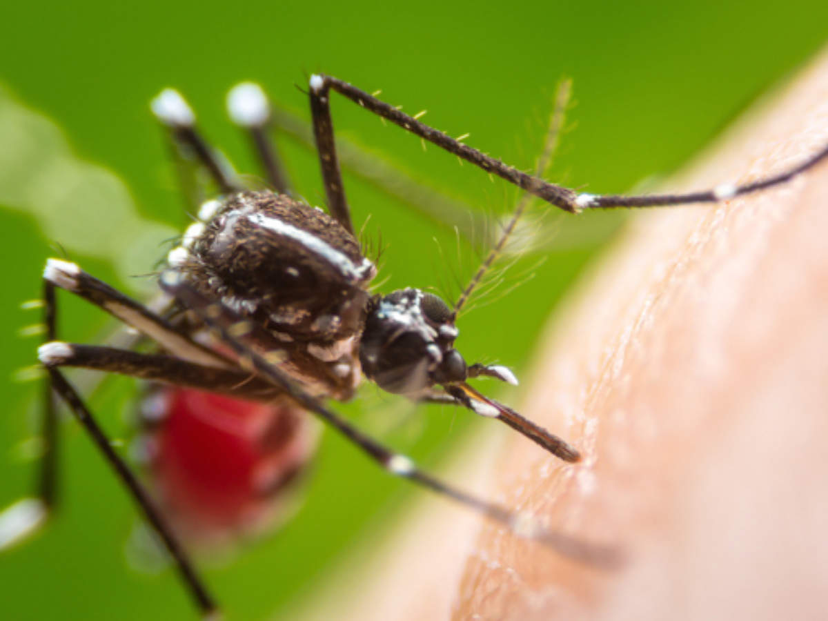 5-scents-that-mosquitoes-really-hate