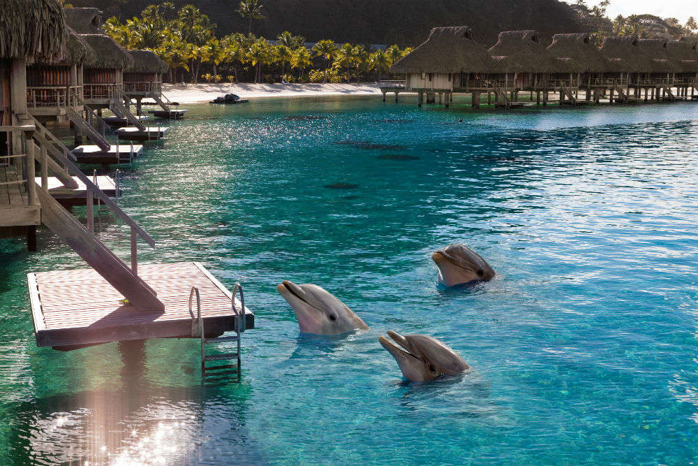 Spotting dolphins in Maldives: tips for travellers