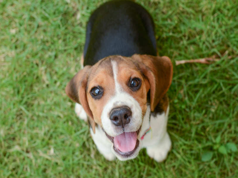 Worried about how to take care of your dog this summer? Here's what you need to do
