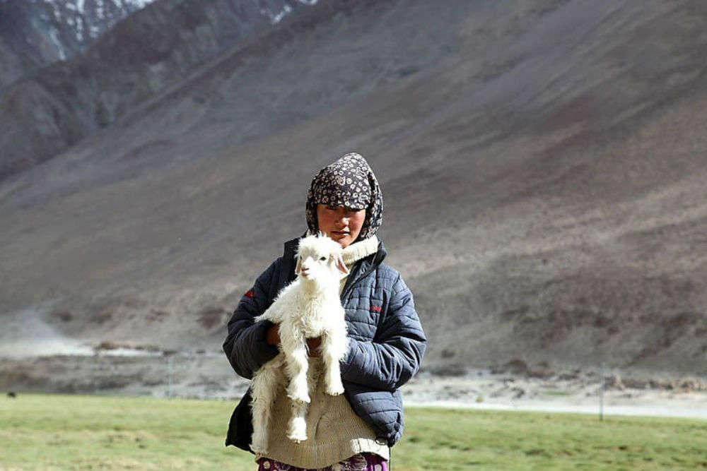 The story of the Changpas of Ladakh