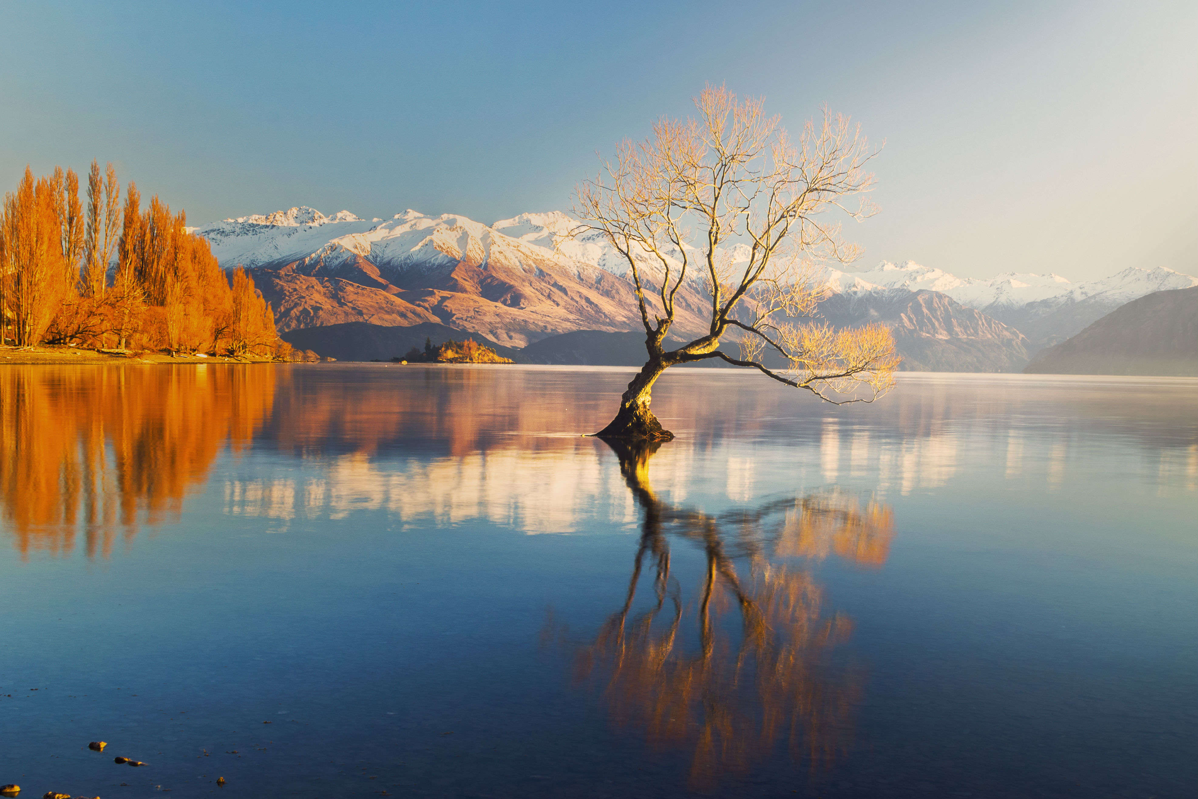 The lone tree of Wanaka Lake—in pursuit of the perfect picture
