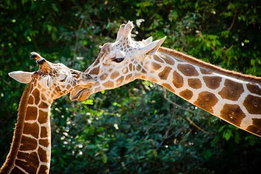 Mumbai to get ultra-modern zoo worth 500 crore