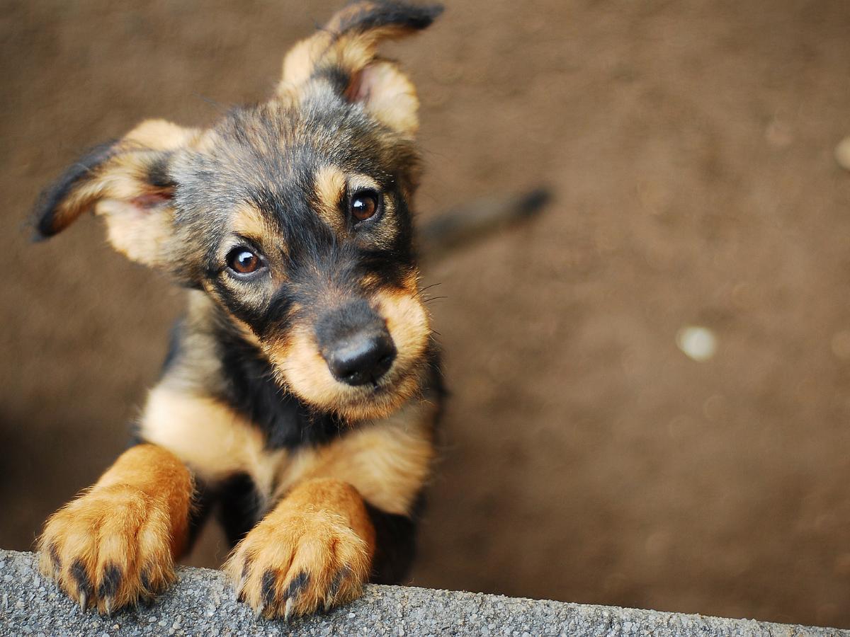 Dog's behaviour myths busted