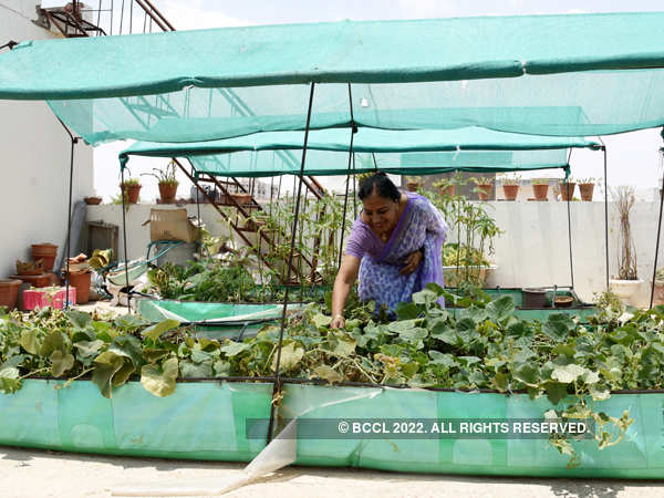 Organic and healthy, Jaipur is growing its own veggies at