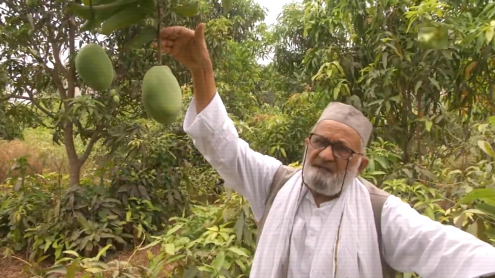 mango-man-grows-new-variety-named-after-amit-shah
