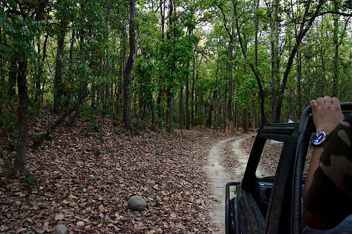 'VIP Stay' not a possibility at Corbett Tiger Reserve now