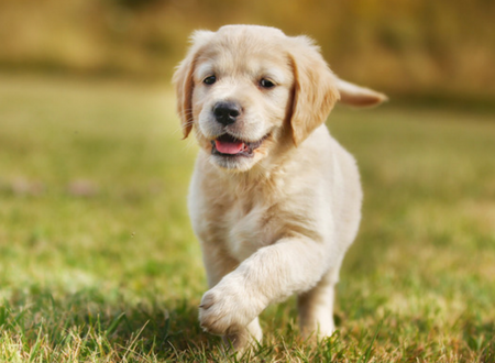Choosing the perfect pet dog is as tricky as finding a perfect date!