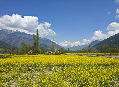 Bhaderwah, the Mini-Kashmir, is now hogging the limelight for all good reasons