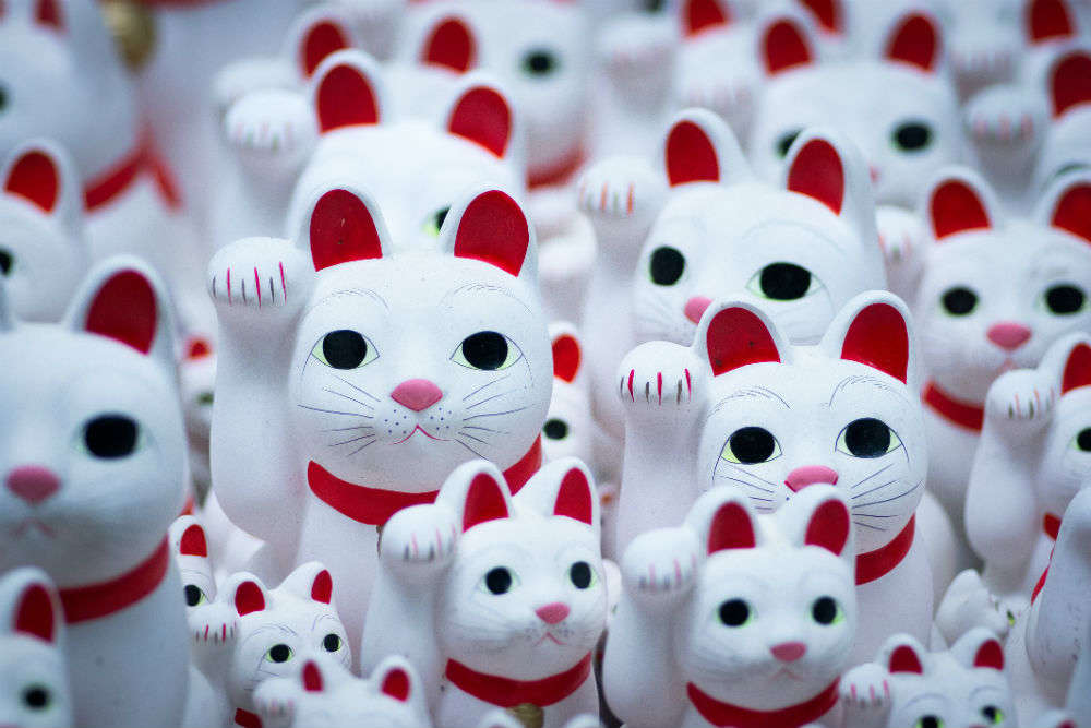 There is a cat temple in Tokyo, and we can't keep calm!