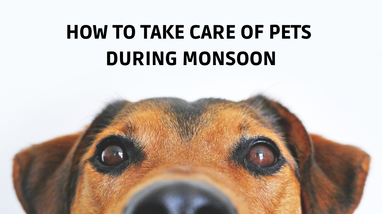 How to take care of pets during monsoon