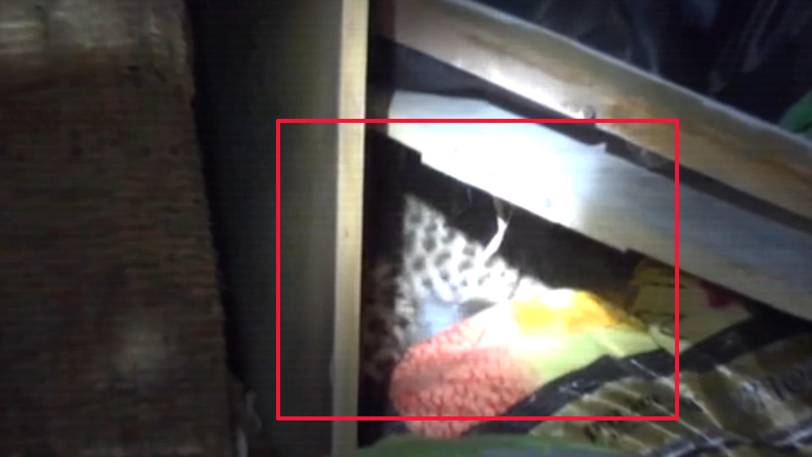 forest-department-officials-rescue-leopard-cub-in-uttarakhands-pithoragarh