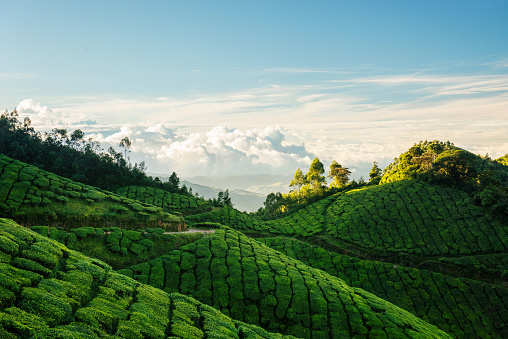A trip to the world's highest tea estate to watch the most glorious sunrise ever