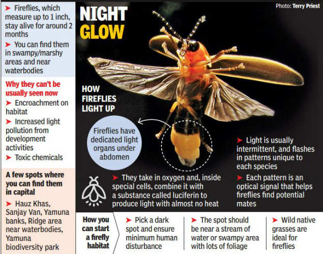 Secret firefly show in the heart of Delhi thrills nature