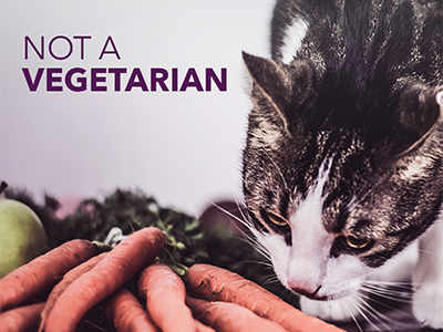 Cat feeding behaviour and tips: Should your cat go vegan? - Times of