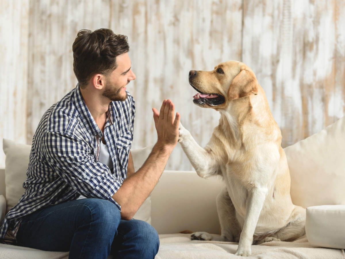 Positive reinforcements: How to train dogs
