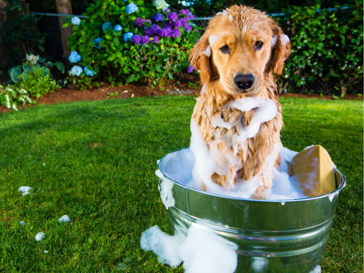 Know the ingredients you need to avoid in your dog's grooming products