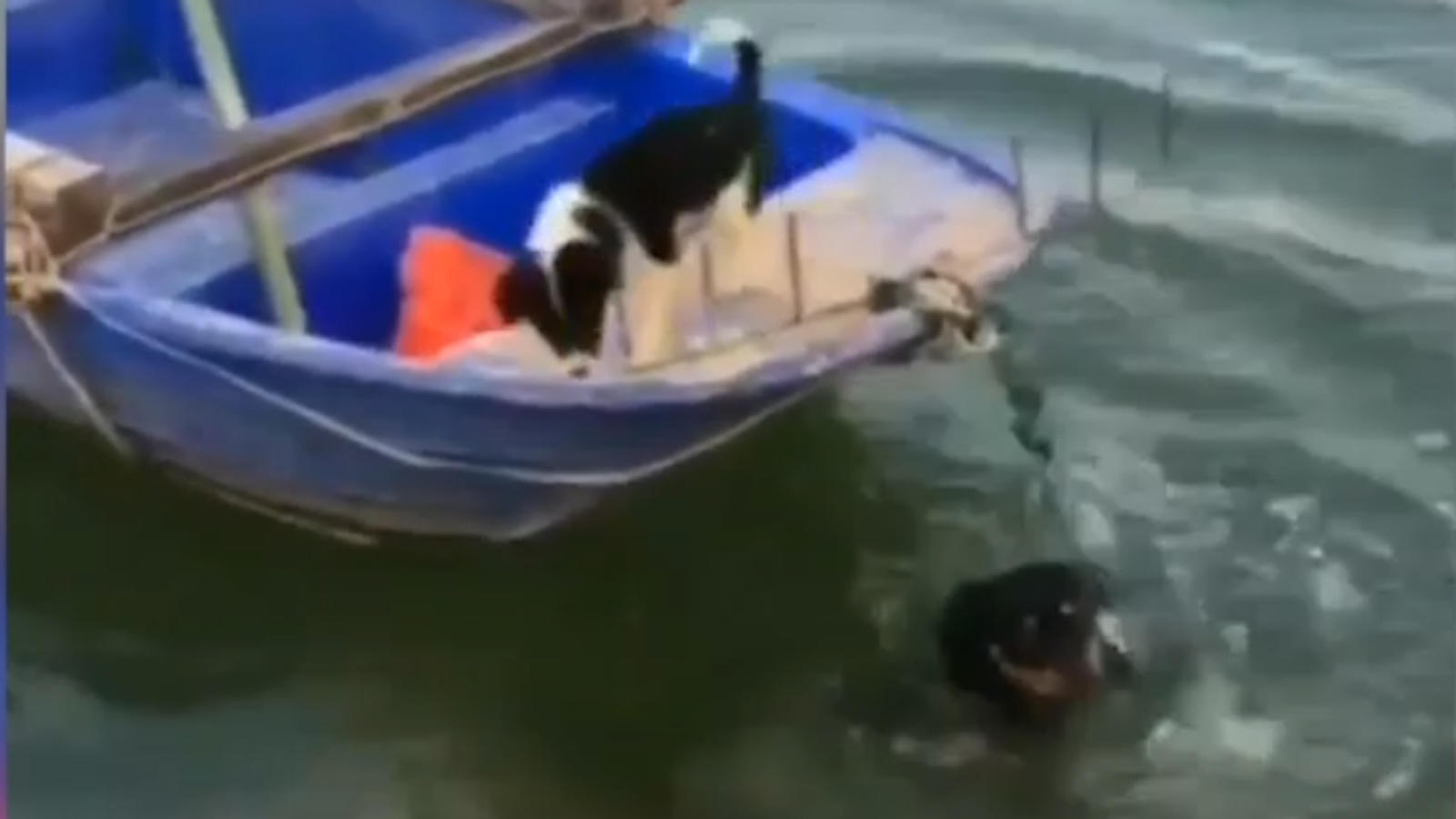 canine-camaraderie-at-its-best