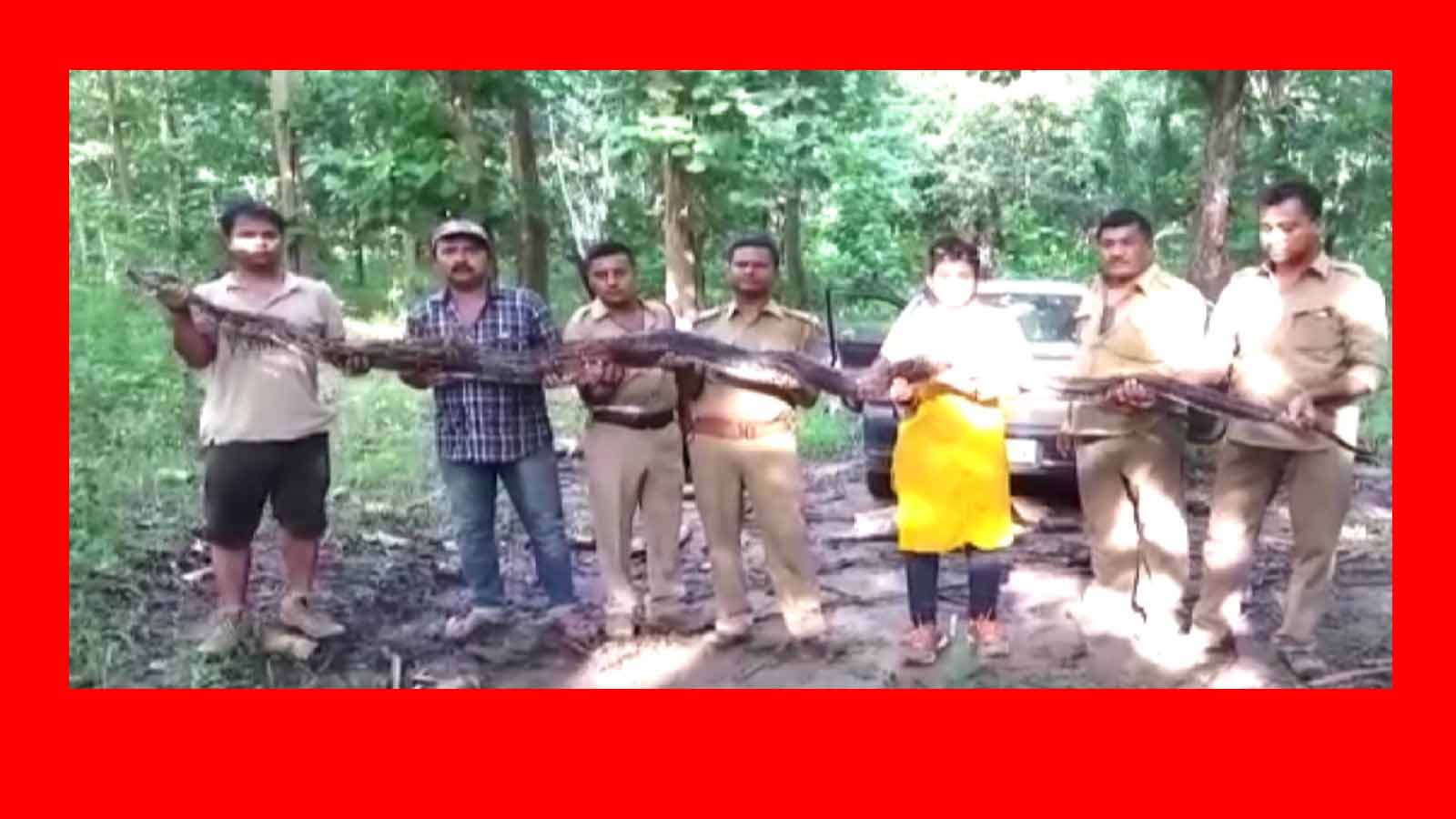 forest-department-rescues-14-5-ft-long-python-in-assam