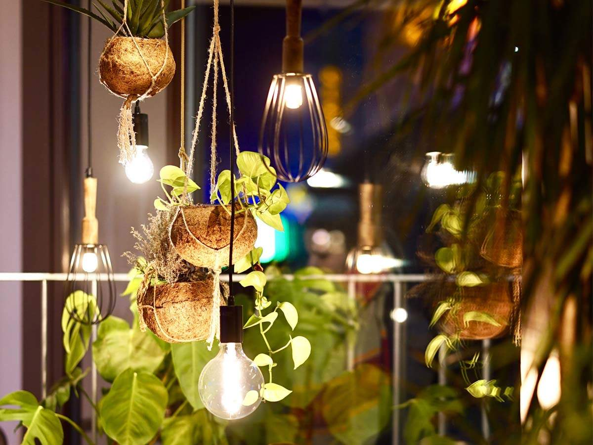 Indoor Plants Best Indoor Plants For Small Spaces And Apartments Most Searched Products Times Of India,Small Apartment Furniture Layout For Small Living Room
