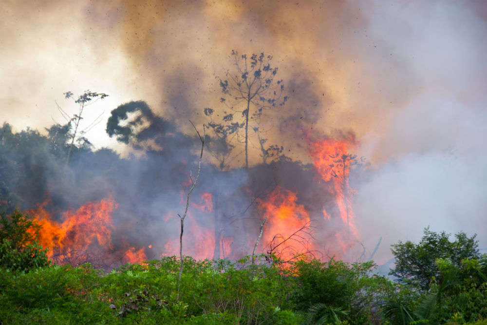 Amazon Rainforest Fire Times Of India Travel