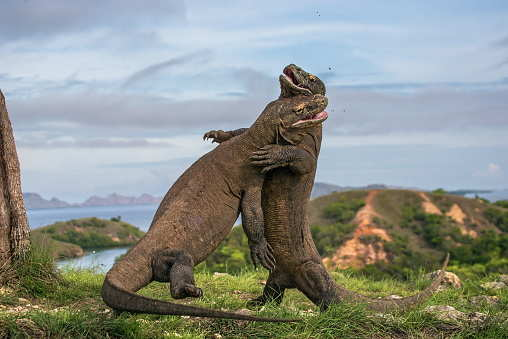 Indonesia's Komodo Island to shut down for tourists from 2020