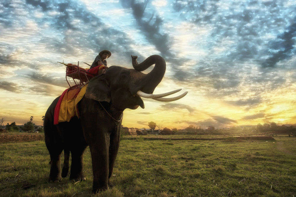 Come 2020 and there will be no more elephant rides at Cambodia's Angkor Wat