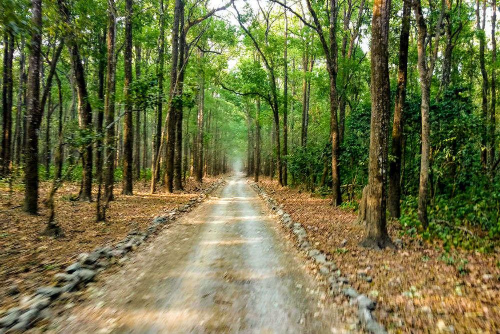 Secret ventures: Haryana's Kalesar Forest Reserve and National Park