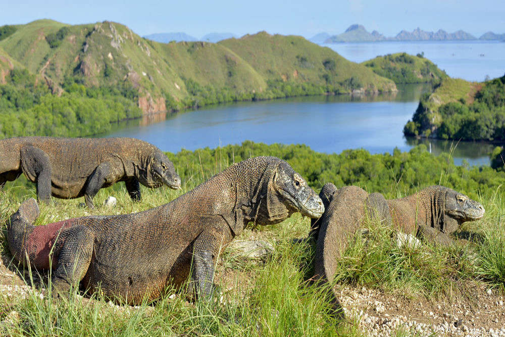 Indonesia cancels the plan of shutting the Komodo Island