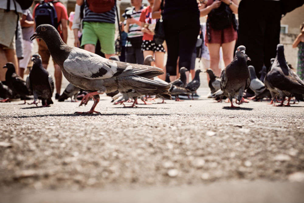 Scaring pigeons is a real job here; tourists paying to get perfect Instagram pics