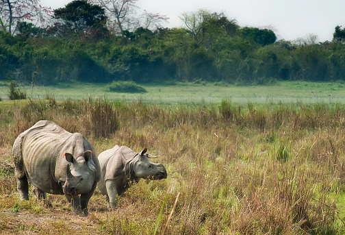 Kaziranga and Manas National Park reopens after a hiatus for tourists