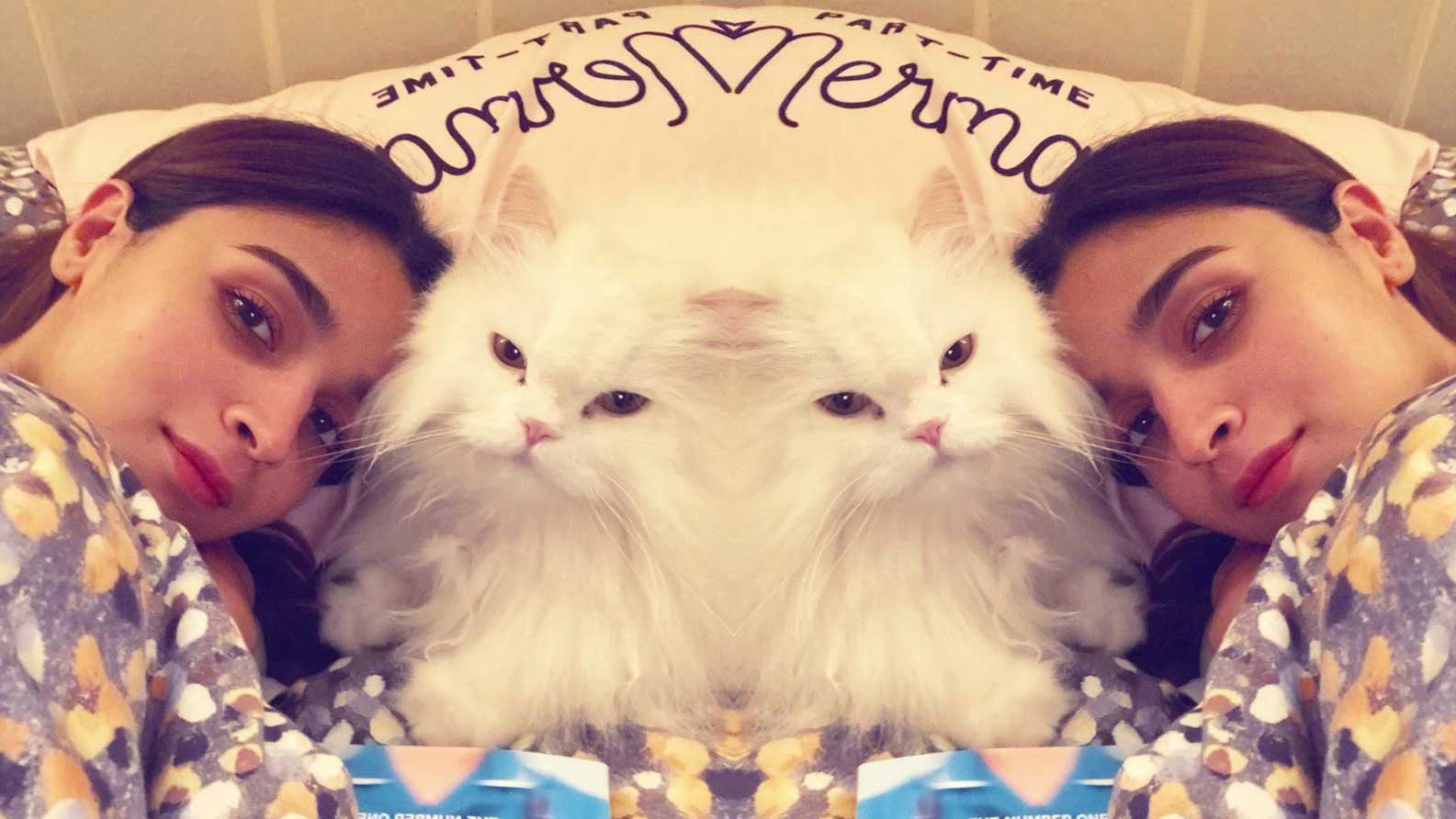 alia-bhatt-shares-adorable-picture-with-her-purry-friend-says-like-mother-like-cat