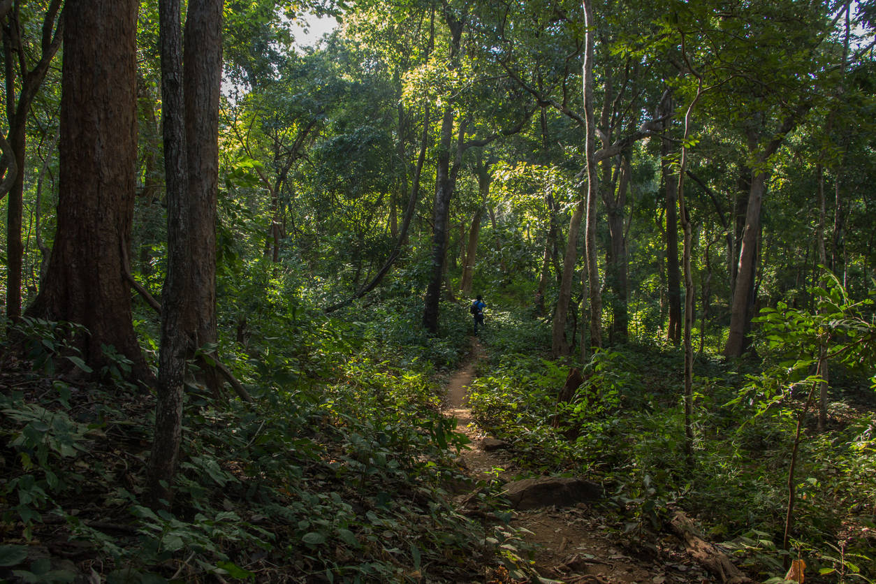 Ram Van Gaman Path in Chhattisgarh to be turned into tourist hotspot