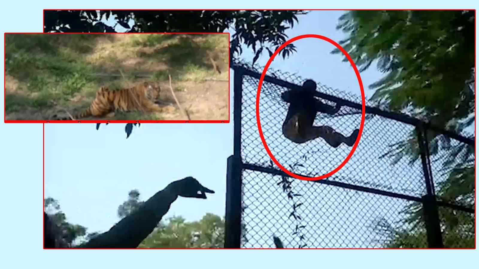 mp-drunk-man-tries-to-jump-into-tigers-enclosure-in-indore