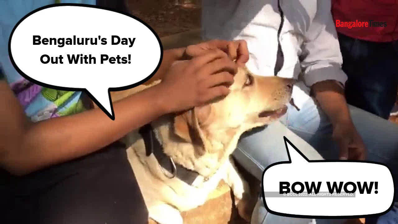 when-bengaluru-pets-walked-to-spread-an-important-message