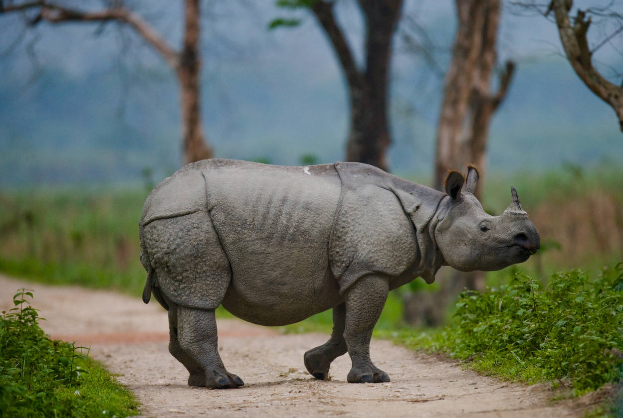 Uttarakhand: Rhinos likely to make a comeback in Corbett Tiger Reserve soon