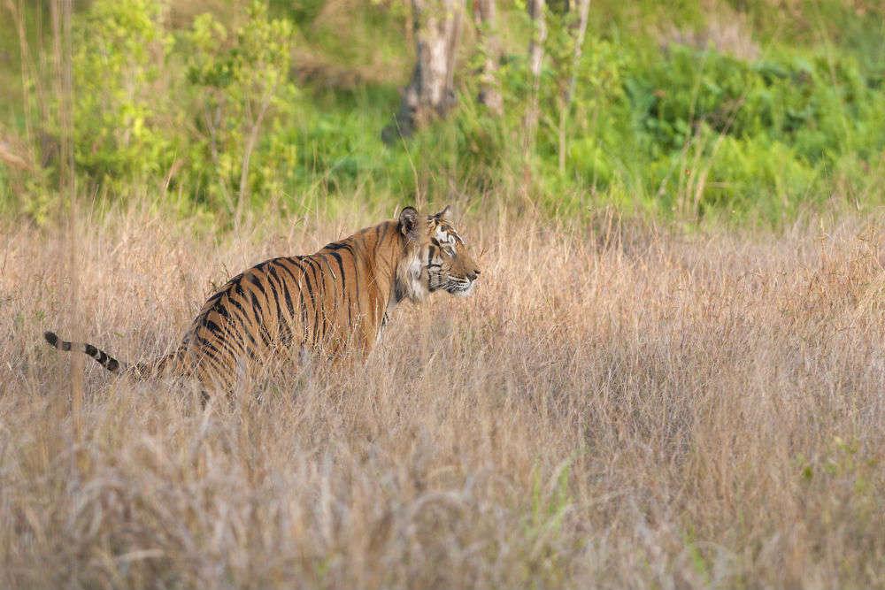 Kanha Tiger Reserve: a perfect winter destination