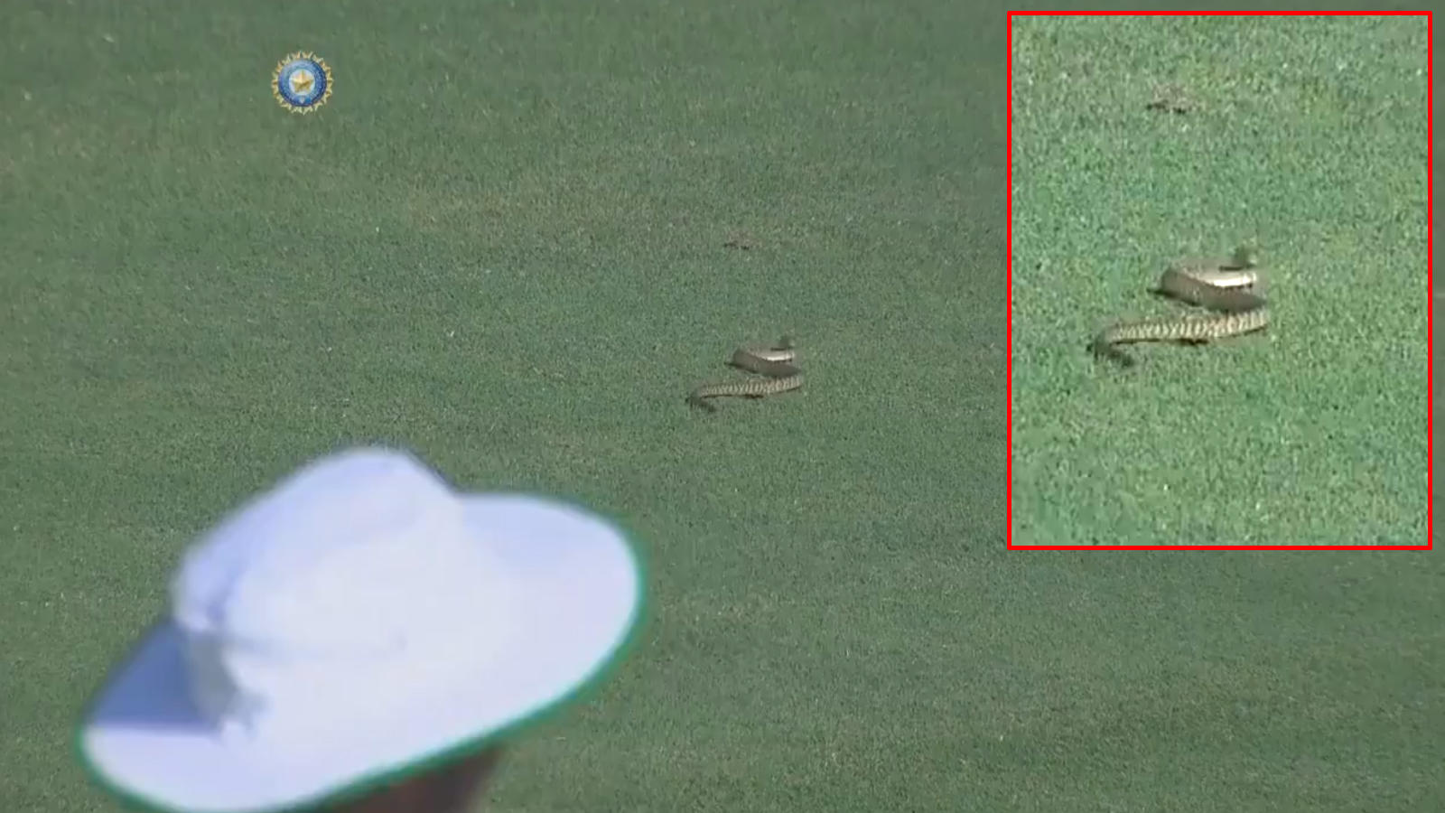 ranji-trophy-2019-snake-enters-ground-delays-start-of-match