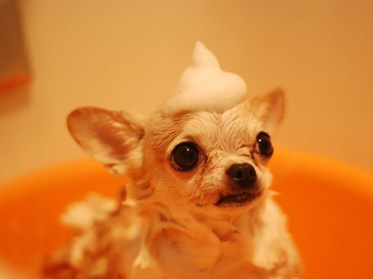 Shampoo me right