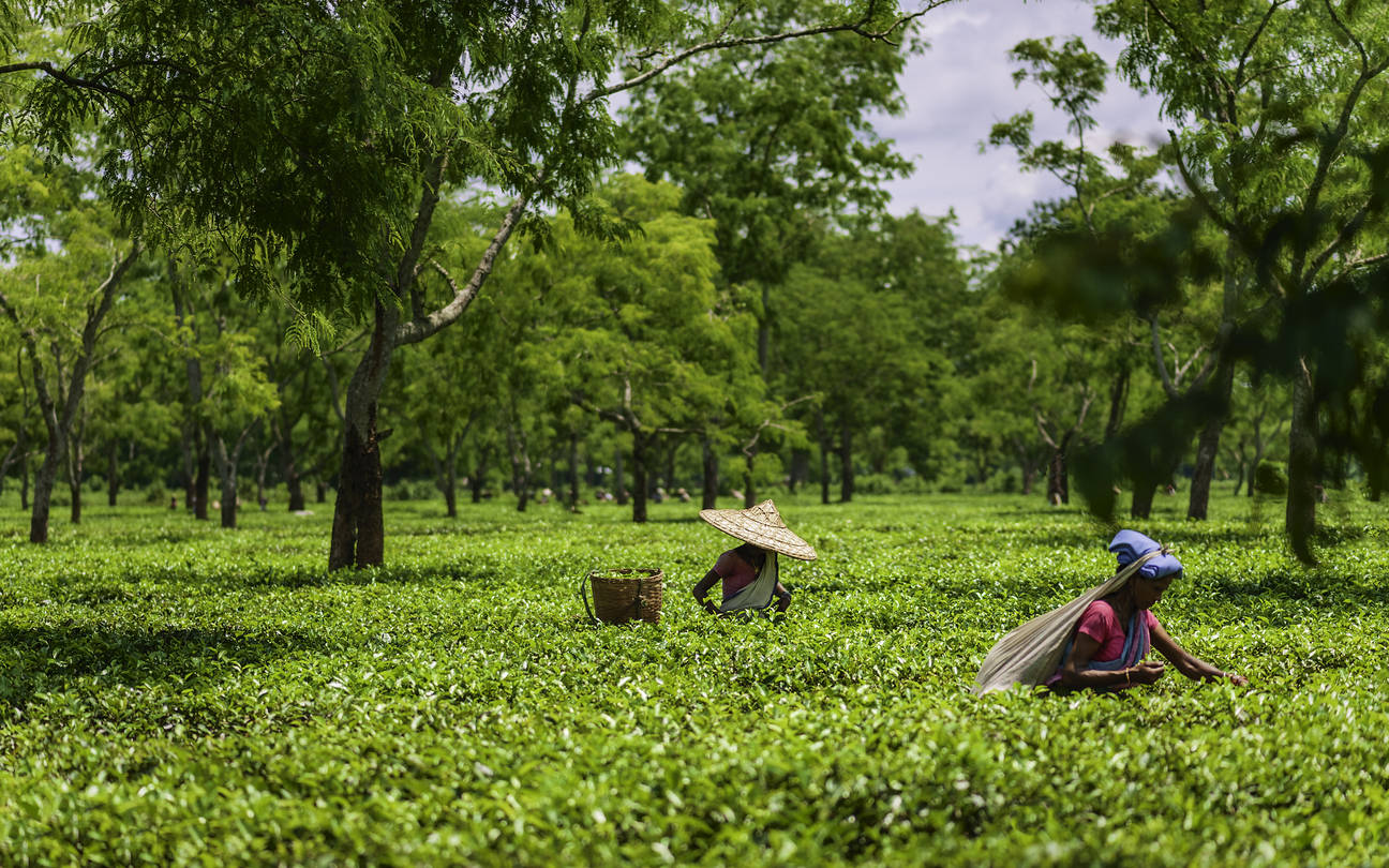 Assam Tourism hit due to ongoing CAA stir