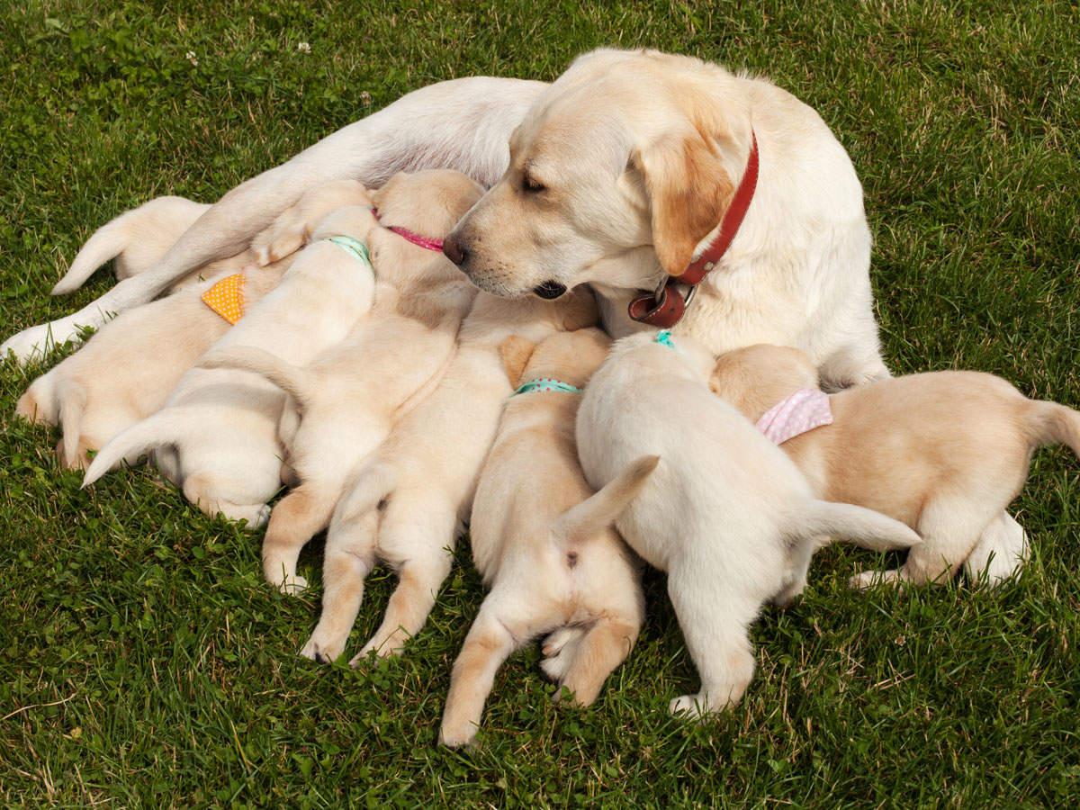 Healthy pregnancy to healthy pups