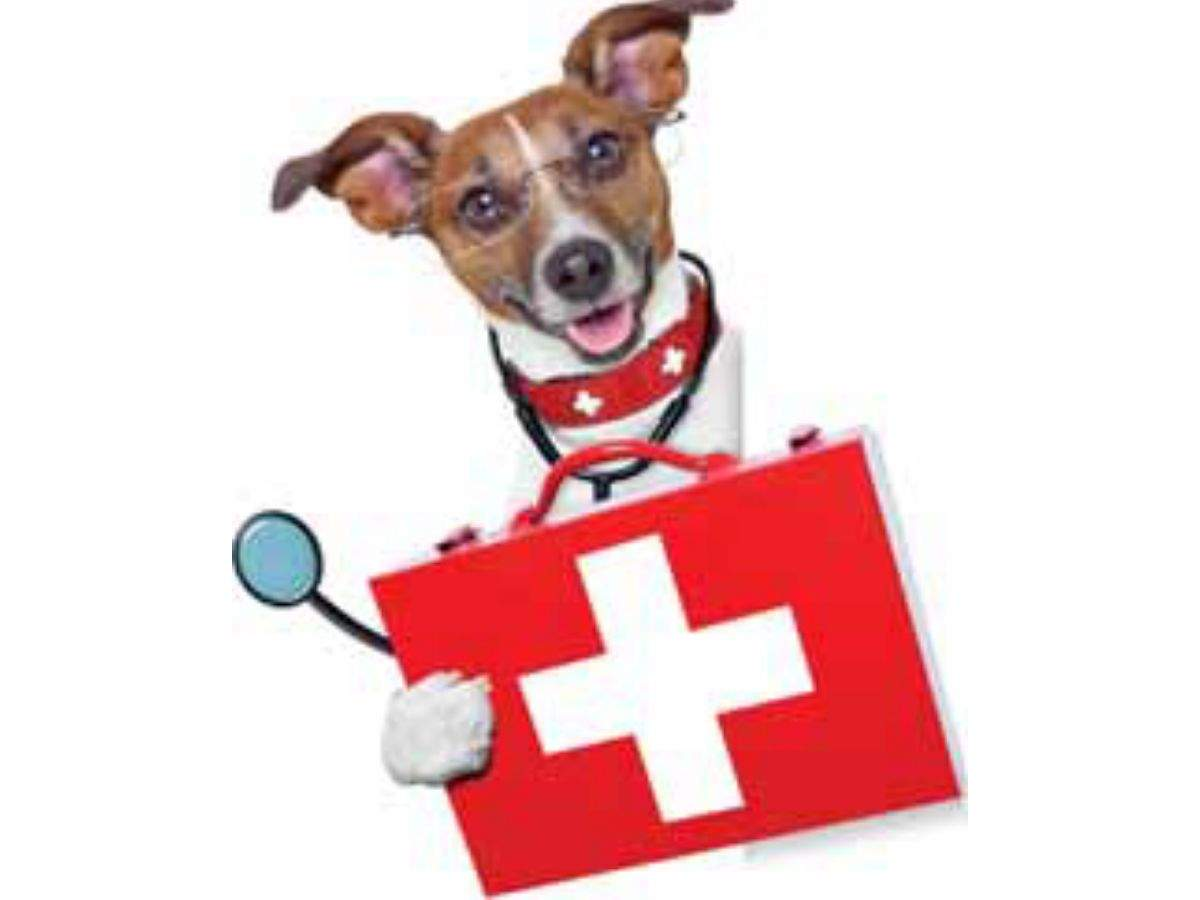 First aid tips for dogs